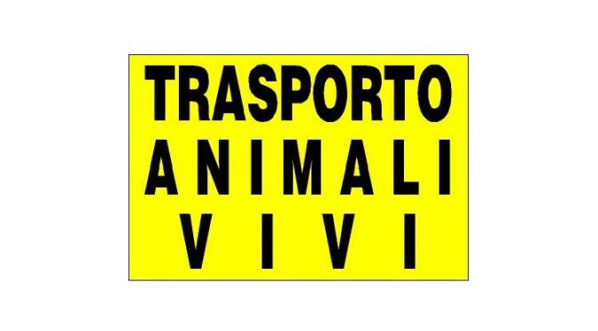 Forlì: maxi-multa e molta attenzione su trasporto animali vivi