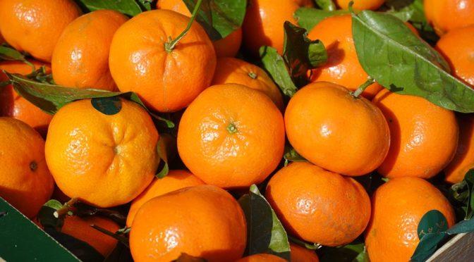 Assalto 'a mano armata' al camion di clementine a Rossano (CS)