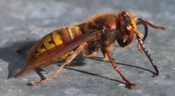 Punto da un'ape al volante del camion in autostrada: autista sotto shock